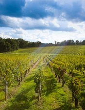 Vignobles Sauternes et Graves Sud-Gironde