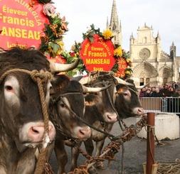 Fête des Boeufs Gras de Bazas