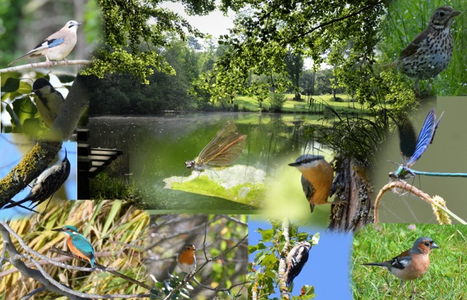 Camping Vert Bord'eau 4 - Saint-Symphorien