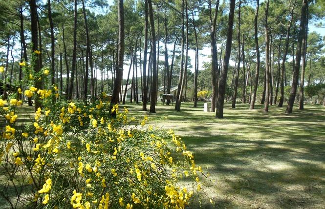 Camping Brémontier 3 - Lège-Cap-Ferret
